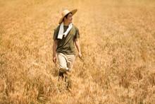 Farmer Harvesting In Wheat Field