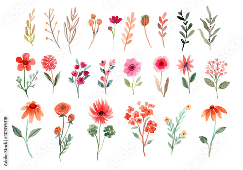 Foto Watercolor Wildflowers Element Vector Collection