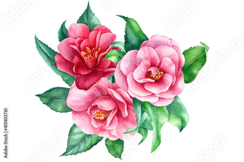 Canvas Print Watercolor flowers, camellia bouquet on white background, spring, botanical illu