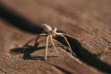 Spider On A Wood