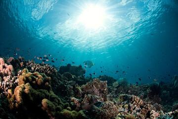 Fototapeta na wymiar The Reef in Maratua (Indonesia)