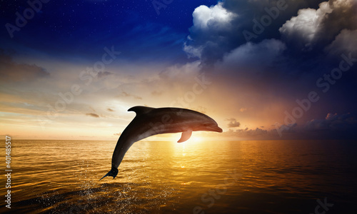 Dolphin jumping in sea water at sunset time Poster Mural XXL