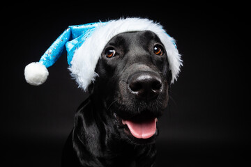 Portrait of a Labrador Retriever dog in a Santa hat, isolated on a black background.