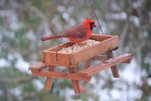 A Red Cardinal Eating Seeds On A Wooden Picnic Table Bird Feeder In The Winter