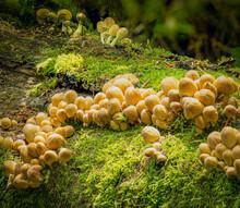 Fungi Growing On Mossy Log 2454