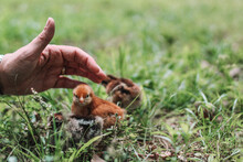 Squirrel In The Hand