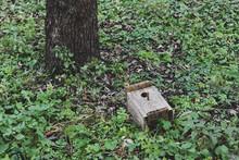 The Bird House Is Lying Near A Tree