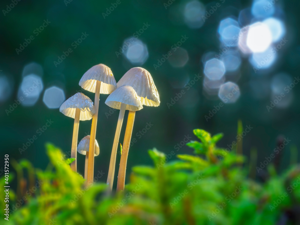 Fototapeta mushroom in the grass