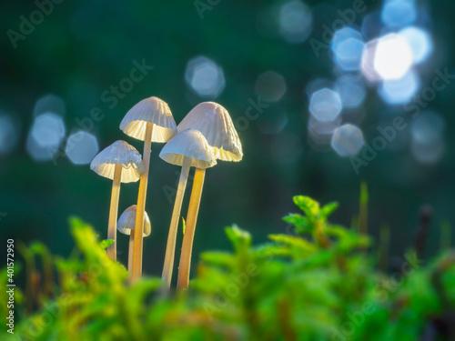 Obraz mushroom in the grass - fototapety do salonu