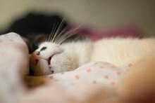 Gatito Durmiendo La Siesta