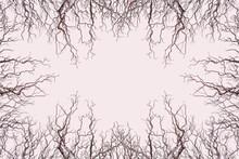 Cadre Silhouettes De Branches Mortes