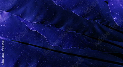 Fototapeta Niebieskie liście zbliżenie, abstrakcyjne naturalne tło. obraz
