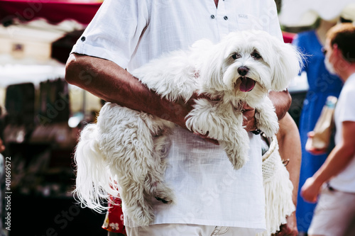 Fotografering Homme qui porte dans ses bras son adorable petit chien bichon blanc