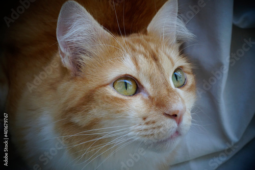 Obraz na plátne Gato