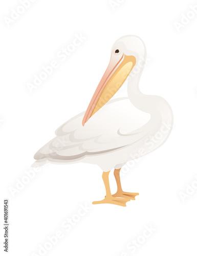 Fototapeta Pelican genus large water bird cartoon animal design big white bird with orange