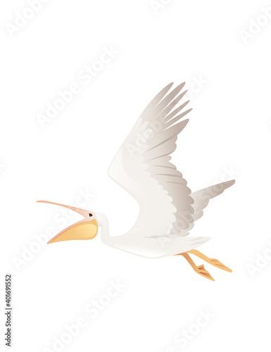 Pelican genus large water bird cartoon animal design big white bird flying with Fototapeta