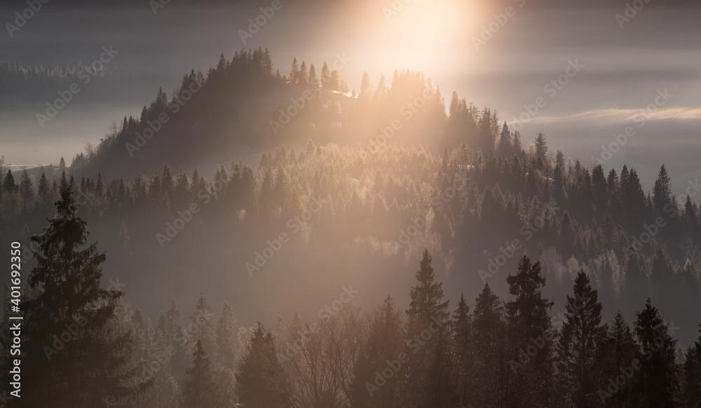 Fototapeta Światło we mgle