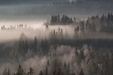 krajobraz górski we mgle