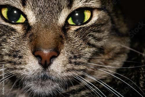 Canvas Print cara del gato