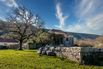 Abandoned stone house in the moutains with a huge tree and stone walls. Stone house in the village of Alvados, Serra de Aire, Portugal