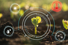 Smart Farm Technology: Plant Sprout Growing In Soil With Infographics Icons And Red Alert Icon Of Temperature For Environmental