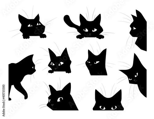 Fotografie, Obraz Funny looking cat