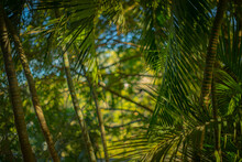 Tropical Foliage Background With Copy Space