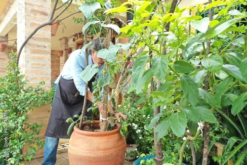 Billede på lærred senior man tending his home garden