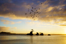 A Beautiful Shot Of Birds Flying Over Siletz Bay In Lincoln City, Oregon At Sunset