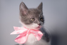 Small Cute Gray And White Kitten Sitting With A Pink Bow Around Its Neck On A White Or Gray Background: Gift On St. Valentine's Day Or New Year, Place For Text, Soft Focus, Close Up