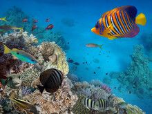Coral Reef And Tropical Fish. Red Sea. Egypt