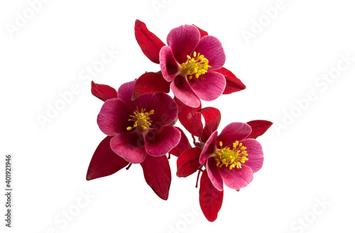 red aquilegia isolated Wallpaper Mural