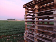 A Stack Of Wooden Pallets In A Cultivated Field