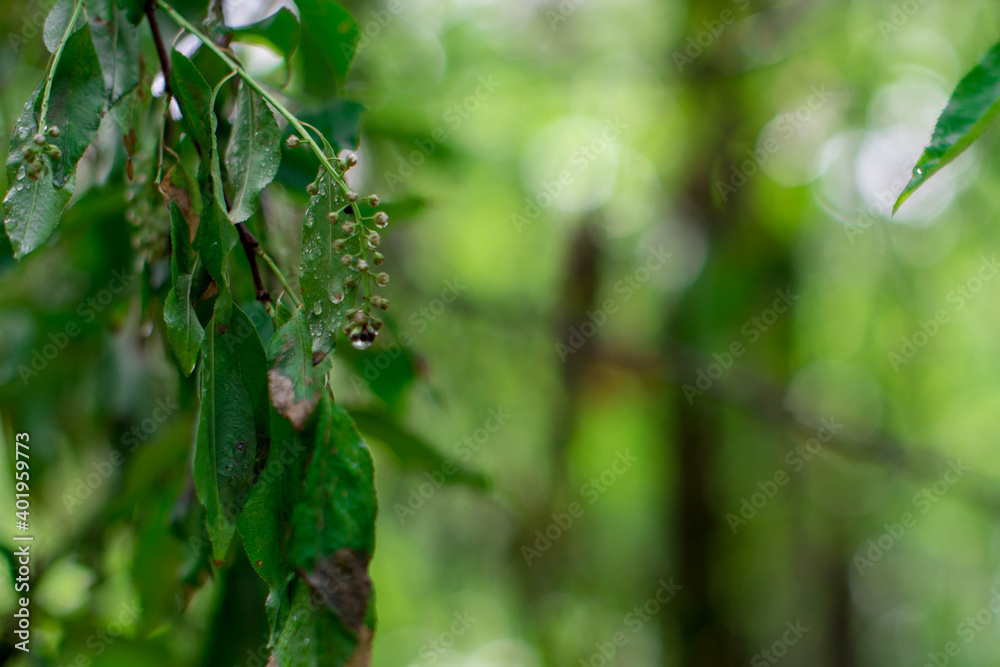 Fototapeta kropla liść drzewa deszcz rosa las drzewo drzewa