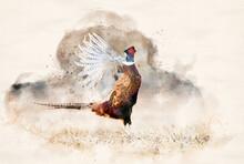 Ringneck Pheasant (Phasianus Colchicus) Male - Watercolor Art