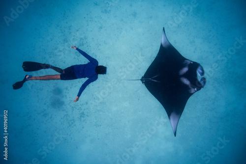 Fototapeta Manta ray with diver snorkeler Hanifaru Maldives