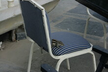 Squirrel Relaxing On The Chair