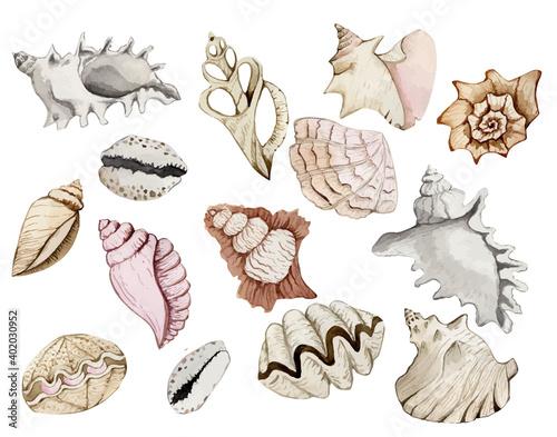 Canvastavla Set of beautiful watercolor seashells, marine decor, seashells, marine print