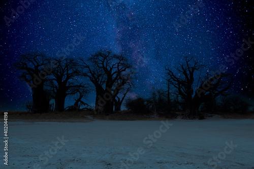Fotografia Night sky at Baines baobabs rest camp in Nxai Pan National Park, Botswana - Afri