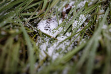 Ice Hail In Damaged Grass. White Ice Crystals On Ground Among Green Leaves