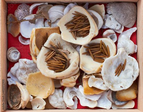 Photographie Vista cenital de colección de conchas, caracoles y hojas secas en una caja