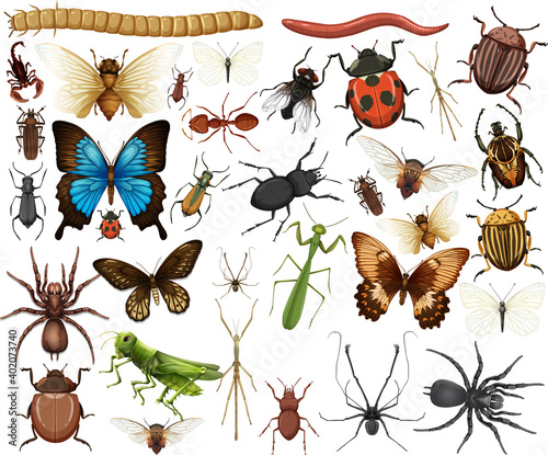 Fotografiet Different insects collection isolated on white background