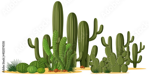 Fotografiet Different shapes of cactus in a group