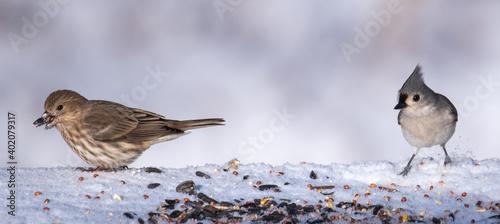 Birds in the backyard in December. Fototapeta