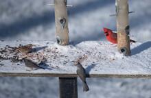 Birds In The Backyard In December.