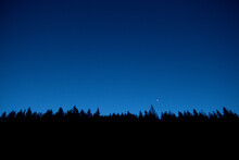 Night Sky And Silhouette Backlit Trees And Forest. Low View Angle Of Top Trees. Clear Sky. Shadow Of Night
