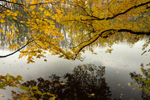 The Branches Of The Trees Bend Over The River In Autumn And Fall Off In The Water. Landscape