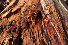 Background Of Wood Grain On Decaying Tree Trunk Log In Morning Sun