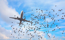 Flock Of Birds In Front Of Airplane At Airport