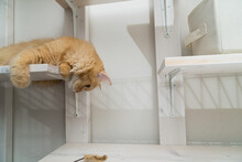 猫じゃらしで遊ぶ猫(マンチカン)